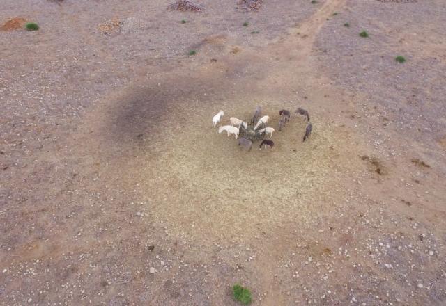 Animales en el Parque Natural de Porto Conte