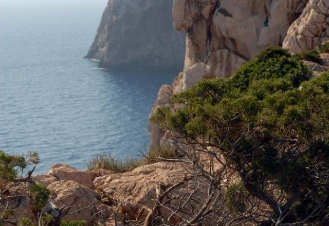 Macchia mediterranea a Capo Caccia